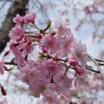 春の花_その2